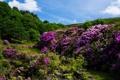 Картинка деревья, цветы, природа, ручей, камни, кустарники