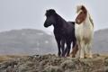Картинка горы, камни, ветер, кони, Исландия