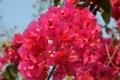 Картинка лето, природа, цветочки, красивые, веточки