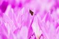 Картинка цветы, природа, бабочка