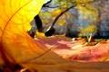 Картинка осень, жёлтый, листик, взгляд изнутри, интересно.