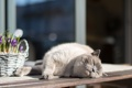 Картинка кошка, цветы, фон