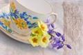 Картинка цветы, чашка, желтая, блюдце, герань