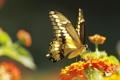 Картинка цветок, насекомое, бабочка, природа, мотылек, крылья