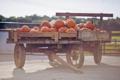 Картинка тыквы, оранжевые, овощи, телега