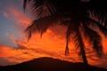 Картинка небо, облака, пальма, дерево, силуэт, зарево