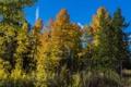 Картинка осень, лес, деревья, ветки, США, Wyoming, кусты