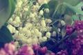 Картинка ландыши, сирень, букет. цветы