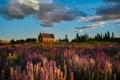 Картинка облака, вереск, небо, холм, дом, цветы