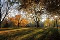 Картинка тени, деревья, парк