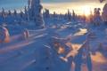 Картинка sunset, winter, snow, tree