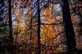 Картинка лес, листья, деревья, ветки, красиво
