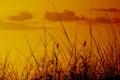Картинка поле, небо, трава, природа, фото, фон, обои
