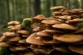 Картинка осень, лес, дерево, грибы, мох, пень