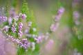 Картинка растение, Цветы, размытие