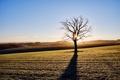 Картинка поле, свет, утро, дерево