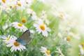 Картинка трава, цветы, природа, весна