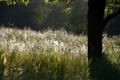 Картинка лето, трава, природа, дерево, красота