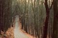 Картинка дорога, осень, лес, пейзаж