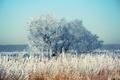 Картинка зима, снег, дерево, камыш