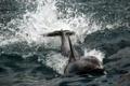 Картинка природа, дельфин, фон
