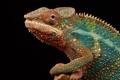 Картинка глаз, хамелеон, цвет, рептилия