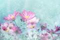 Картинка цветы, розовые, Нежно