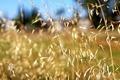 Картинка поле, лето, Растения