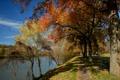 Картинка осень, деревья, озеро, пруд, парк, дорожка