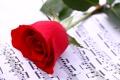 Картинка ноты, роза, тетрадь, красная, боке, крупным планом