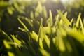 Картинка зелень, трава, макро, лучи, свет, фото, фон