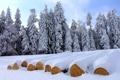 Картинка зима, лес, деревья, брёвна