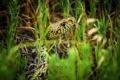 Картинка трава, макро, змея