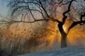 Картинка солнце, туман, дерево, утро