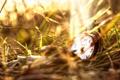 Картинка трава, часы, крышка, циферблат, боке