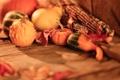 Картинка осень, кукуруза, урожай, тыква, овощи