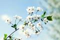 Картинка природа, ветка, весна, лепестки