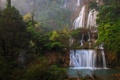 Картинка листья, деревья, природа, джунгли, водопады