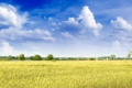 Картинка поле, небо, дома