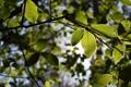 Картинка ветки, green, зелень, листья, обои, природа, ветви