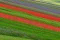 Картинка поле, плантация, цветы