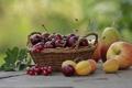 Картинка лето, вишня, корзина, яблоко, фрукты, смородина, груша. абрикосы