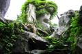 Картинка листья, камни, дерево