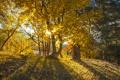 Картинка осень, лес, листья, деревья, желтые, лучи солнца