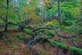 Картинка осень, лес, листья, деревья, палки, Природа, коряги