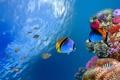 Картинка рыбы, природа, морская звезда, морское дно, fish, starfish, the nature