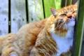 Картинка кот, рыжий, забор