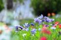 Картинка поле, цветы, растение, сад, луг