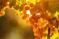 Картинка листья, свет, виноград, лоза, паутинка