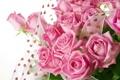 Картинка розы, лепестки, сердечки, розовые, бутоны, тесьма